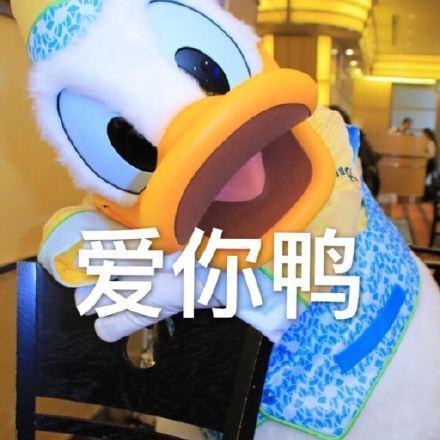 【组图】唐老鸭约人表情包:今天吃什么鸭,求安排鸭,什么时候出去玩鸭图片