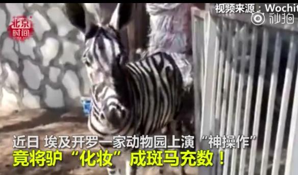 """动物园给驴""""化妆""""装斑马(图)"""