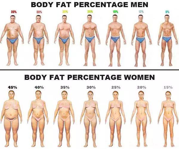 人体祼体_体脂率是指人体内脂肪重量在人体总体重中所占的比例,又称体脂百分数