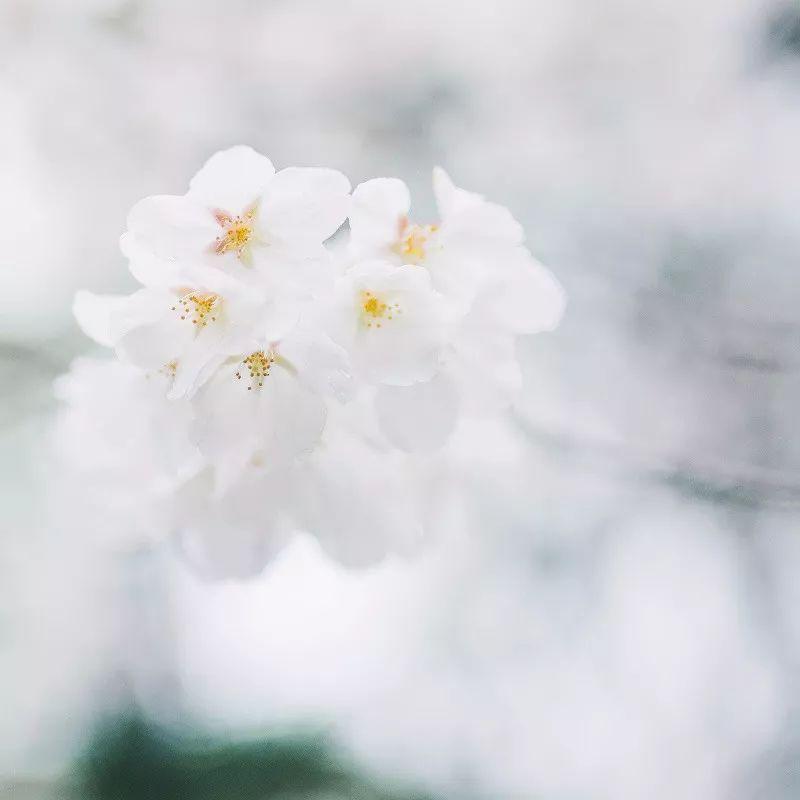 【仰视人生】人生最美是淡然