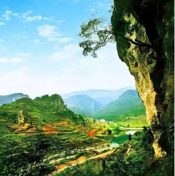 旅游 正文  大板营位于酉阳县木叶乡境内,山上有21246多公顷原始森林图片