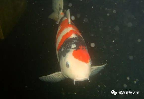 26个养鱼常见问题,看完涨姿势!~ (图24)