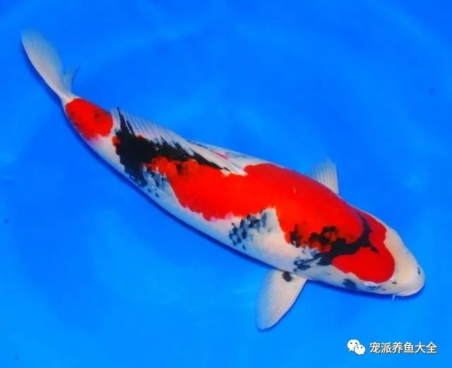 26个养鱼常见问题,看完涨姿势!~ (图10)