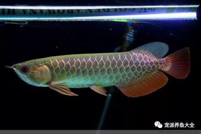 26个养鱼常见问题,看完涨姿势!~ (图6)