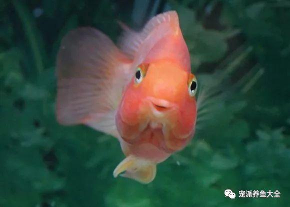 26个养鱼常见问题,看完涨姿势!~ (图29)