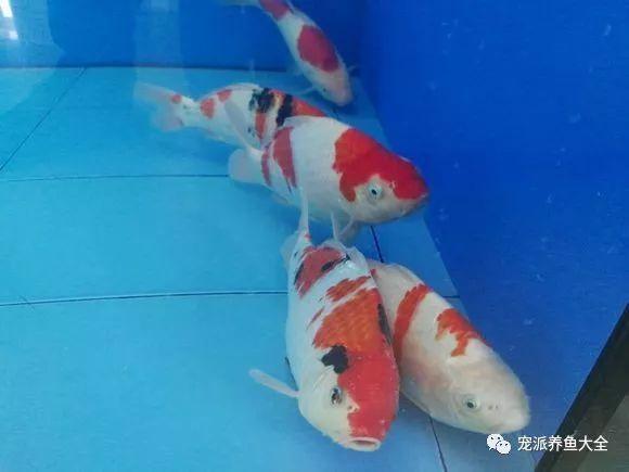 26个养鱼常见问题,看完涨姿势!~ (图32)
