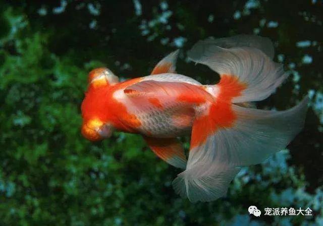 26个养鱼常见问题,看完涨姿势!~ (图13)