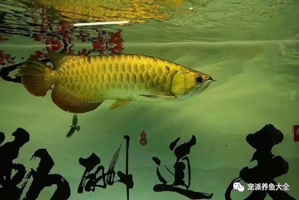 26个养鱼常见问题,看完涨姿势!~ (图8)