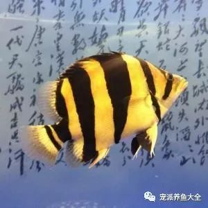 26个养鱼常见问题,看完涨姿势!~ (图15)
