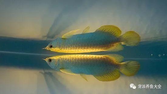 26个养鱼常见问题,看完涨姿势!~ (图11)