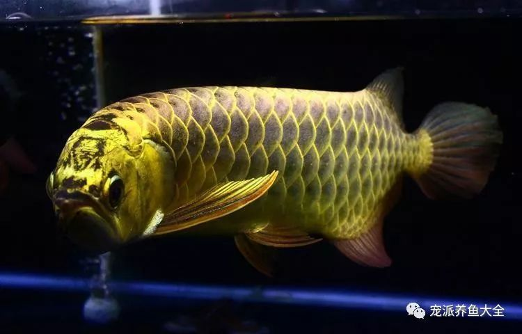 26个养鱼常见问题,看完涨姿势!~ (图4)