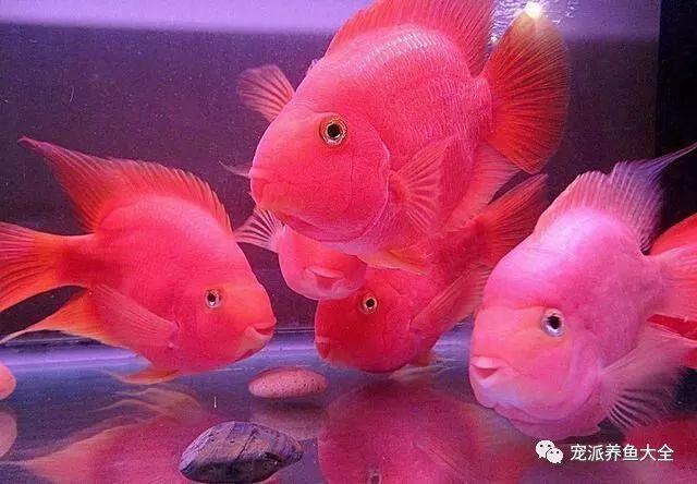26个养鱼常见问题,看完涨姿势!~ (图30)