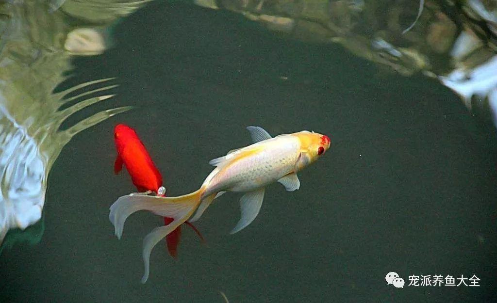 26个养鱼常见问题,看完涨姿势!~ (图35)
