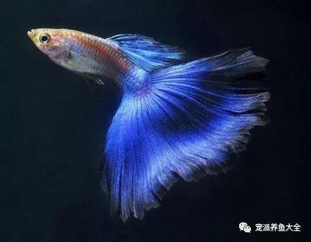 26个养鱼常见问题,看完涨姿势!~ (图3)