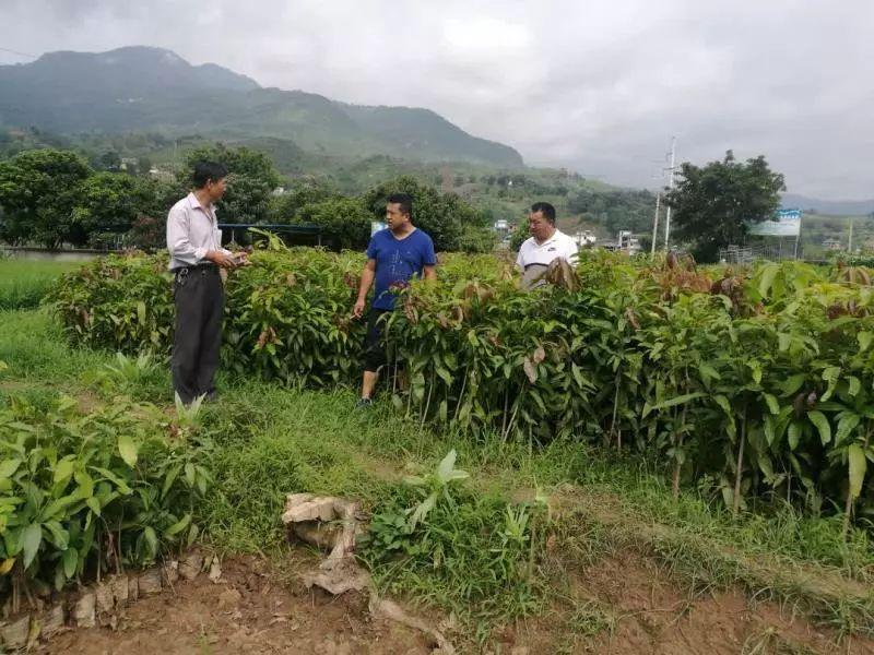 【聚焦】为了这个小中国沿河网村落的成长,金安镇的做法是……