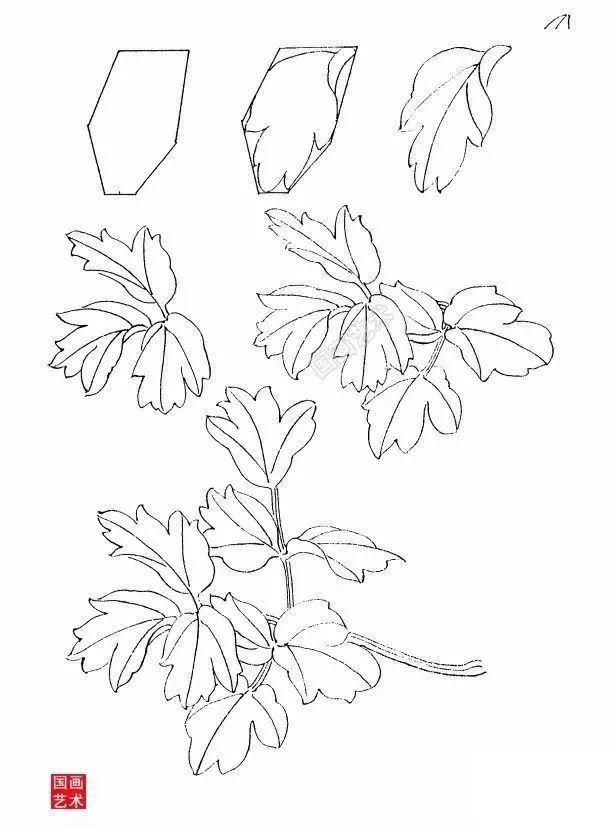 【国画知识】牡丹写生白描技法,你学会了吗?图片