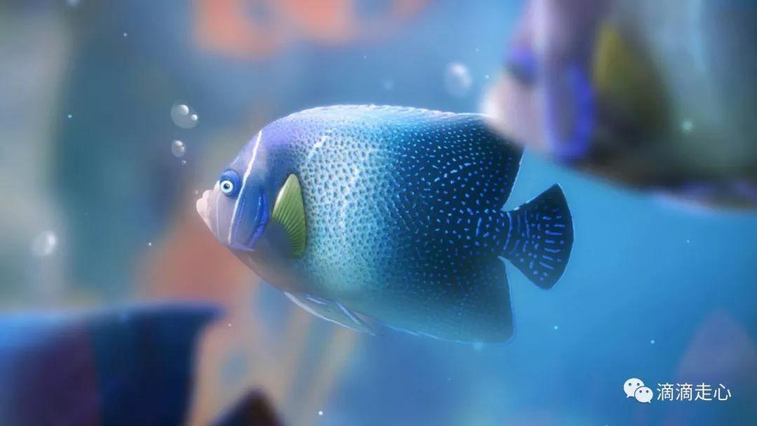 我是你放生的那尾鱼 文/惊鸿照影 我是一尾鱼 在你的心海游弋 自由自在 游来游去 我是一尾鱼 在你的梦里栖息 无声无息 幸福甜蜜 我是一尾鱼 你的微笑 就是我呼吸的空气 你的眼泪 就是我生存的水滴 我是一尾鱼 在你眼泪汇成的海里 我是一尾鱼 在你的琉璃盏里嬉戏 我是一尾鱼 没有你 我无法自由呼吸 我是一尾鱼 离开你 我怎么能活下去 作者:惊鸿照影 微信公众号滴滴走心(id:ddzouxin) 原创 转载请注明 凡投稿的原创文章在发布之日起,三天内的赞赏30%奖励给作者(赞赏金额要满20元,才能有奖励),