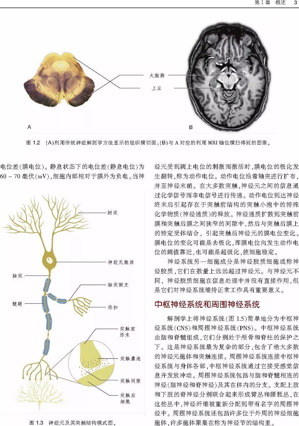 神经解剖傻傻分不清?这里有一本彩色图谱拯救你!