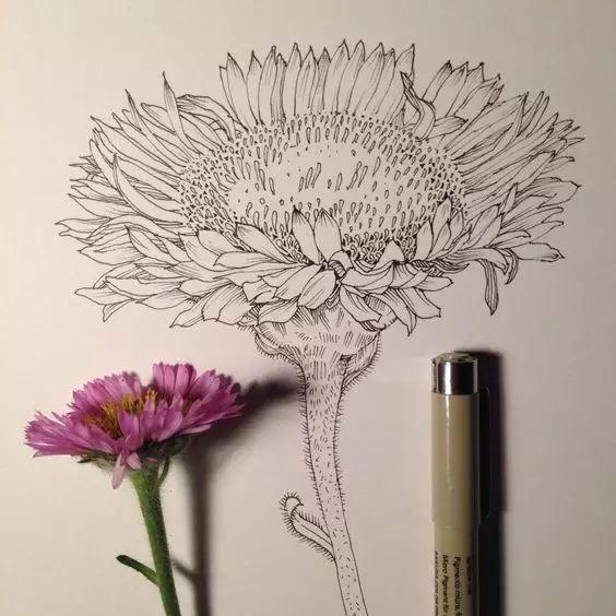 彩铅课堂220 针管笔画植物手绘可以这么美!