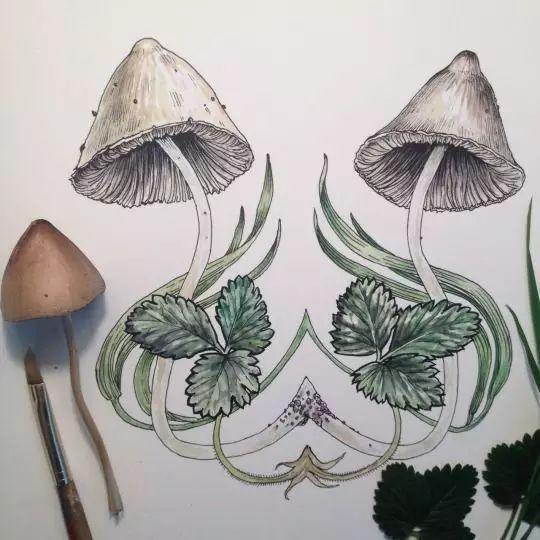 彩铅课堂220|针管笔画植物手绘可以这么美!