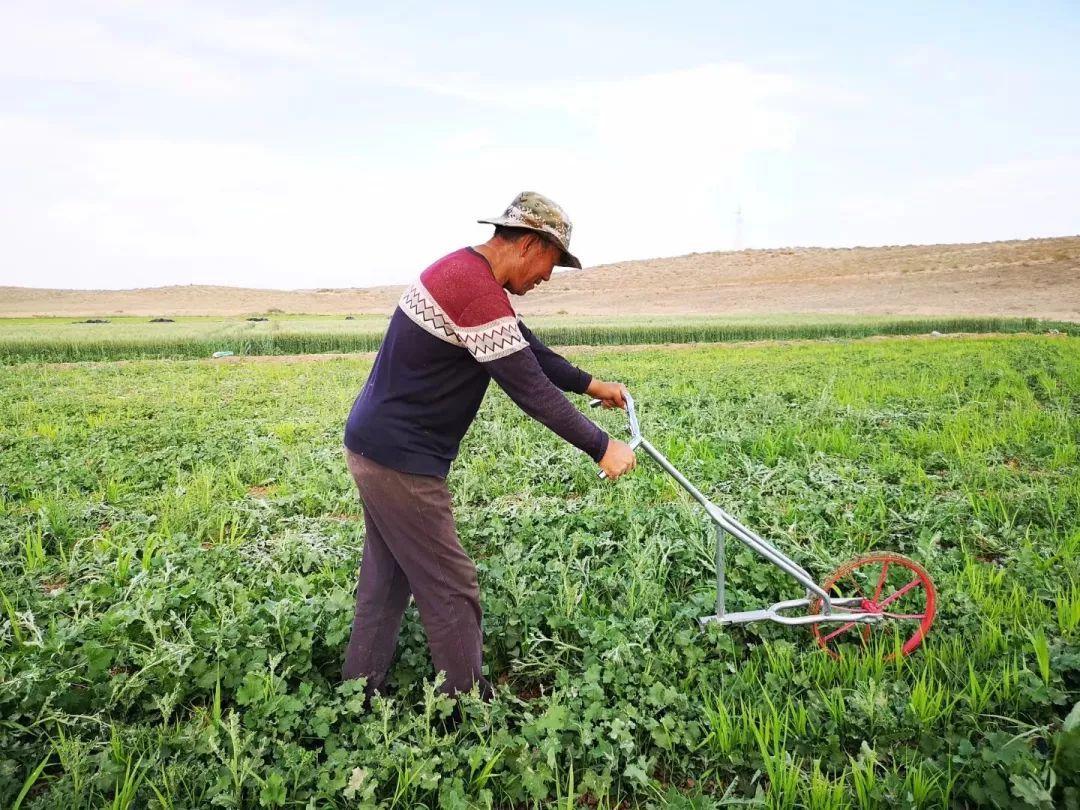 种地壁纸_重磅预售 深扎阿拉善十五年 从治沙到种地 彦伟种出了