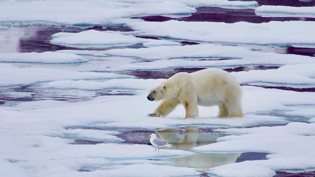 行程| 北极盛夏进行时斯瓦尔巴环岛深度之旅