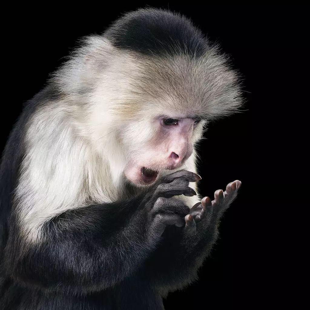 中字无码番�_这些高清无码的动物照,假的像画的一样!