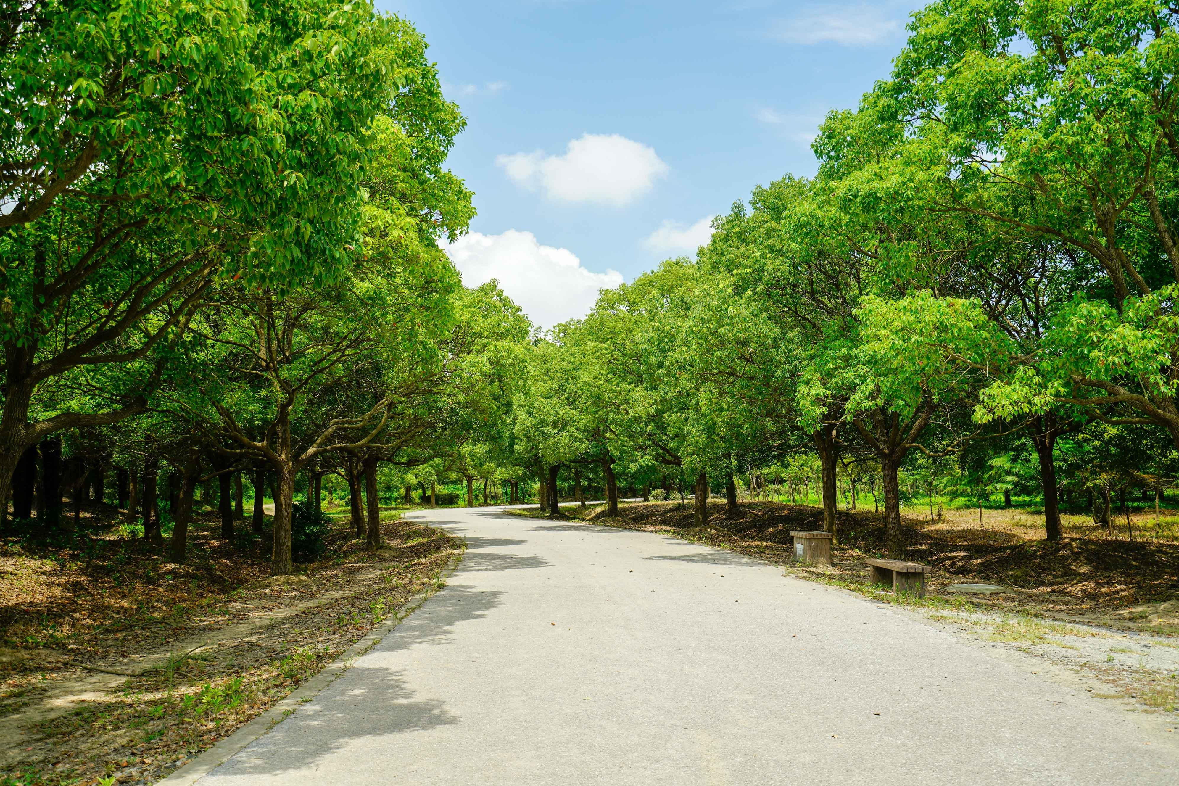 上海37度高温天,在滨海森林公园看蓝天白云马
