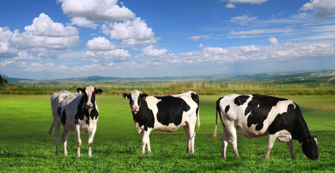 连喝牛奶都受到中美贸易战的影响了?品牌新事