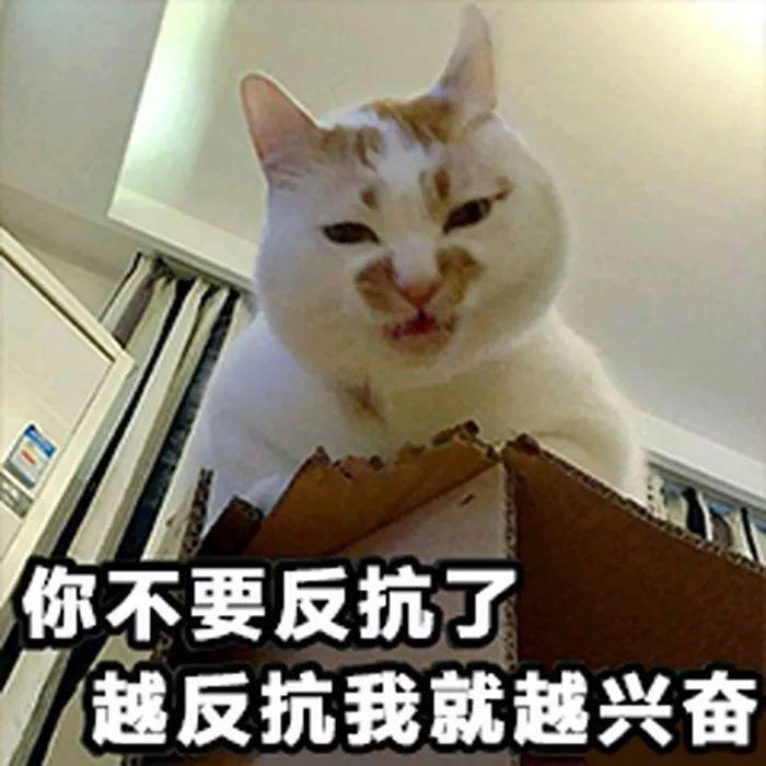 壁纸/头像 | 超可爱搞笑猫咪表情包