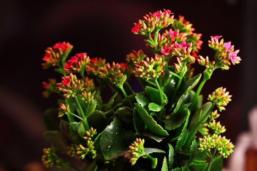 新手适合养什么花或植物图片