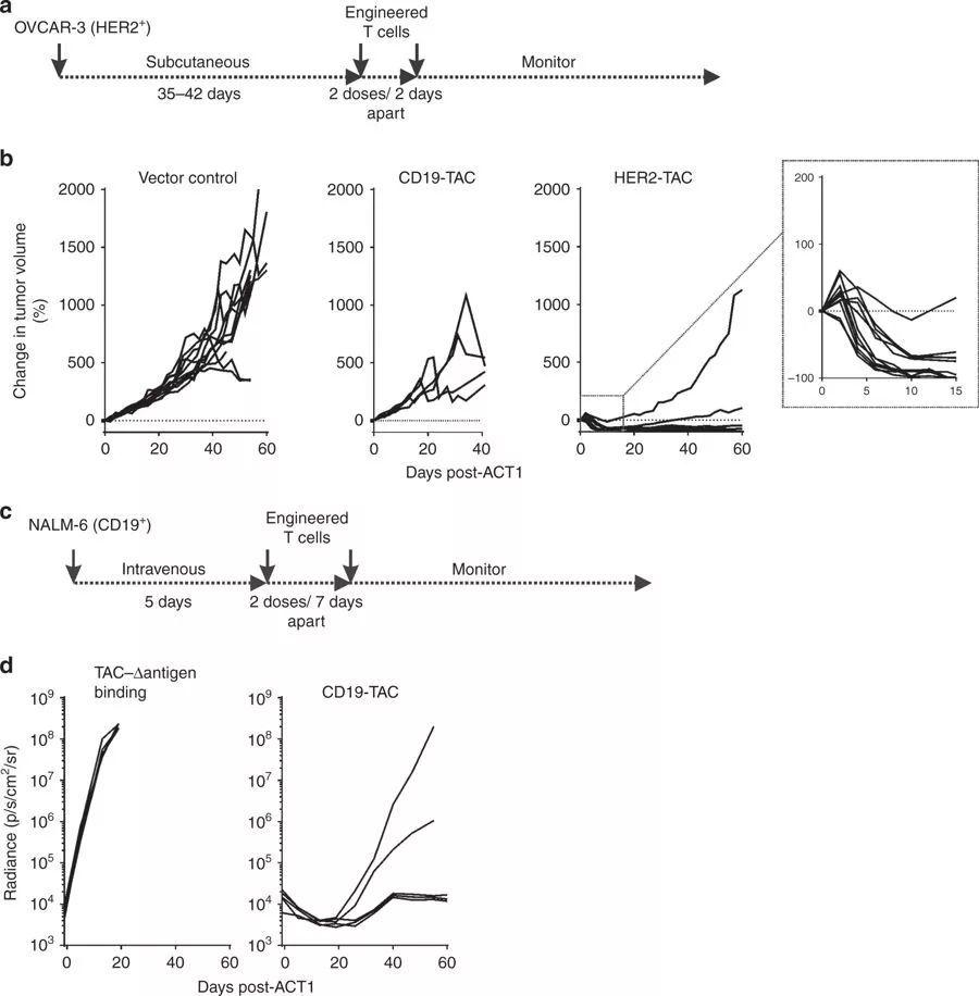 《自然》:TAC-T显示出更强的肿瘤穿透性