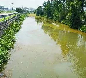 水头这两条河太脏被曝光!负责人也揪出来了