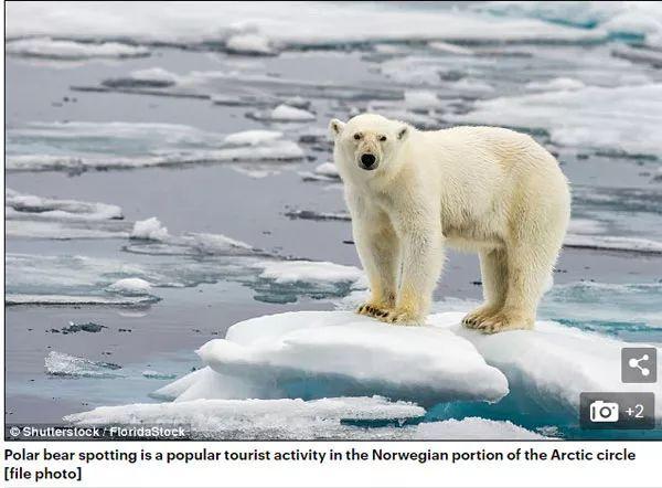【意思】今年真的格外热热到北极熊们快家破人亡了双语和日历风和蜜蜂啥日历图片