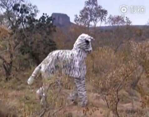 两男子假扮斑马,竟然被狮子看上了 差点被吃掉