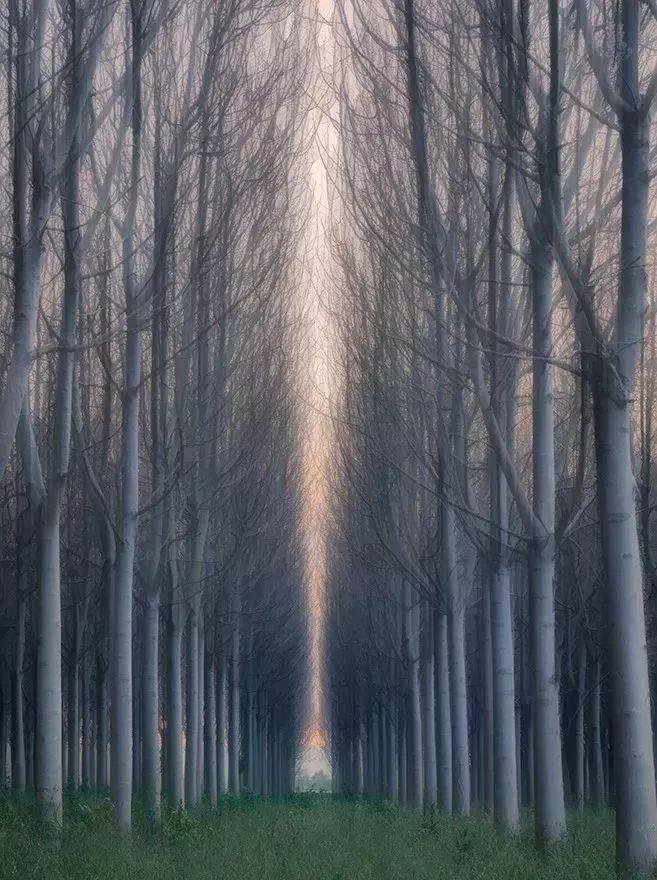 树林拍成唯美大片 5个绝招