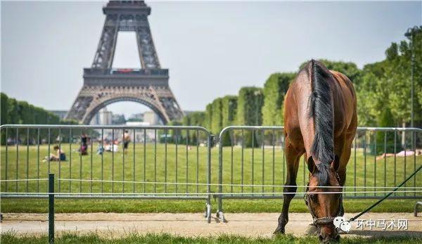 保持专注,马术运动只关乎于你和你的马,忘掉黑子们的诋毁,为自己去骑乘吧!