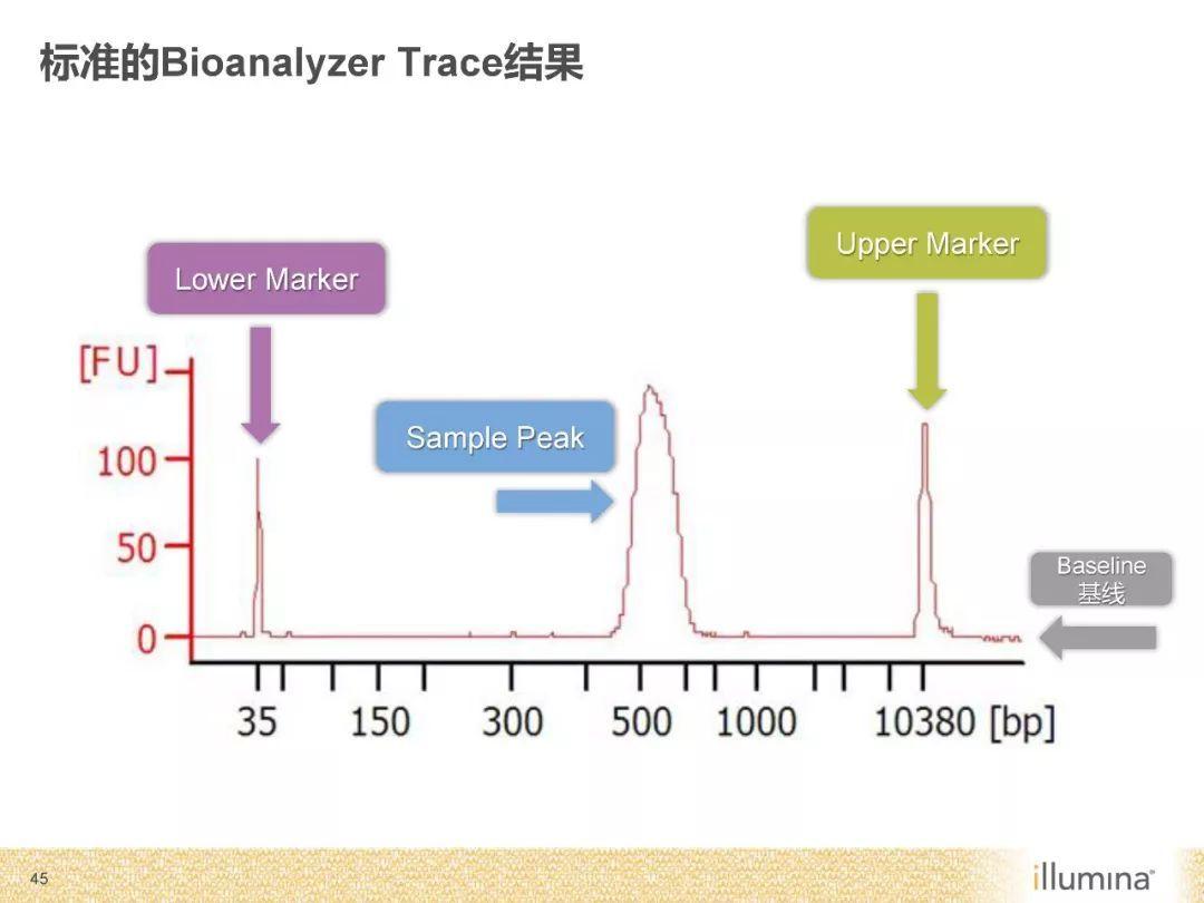 测序的原理_基因芯片的测序原理图