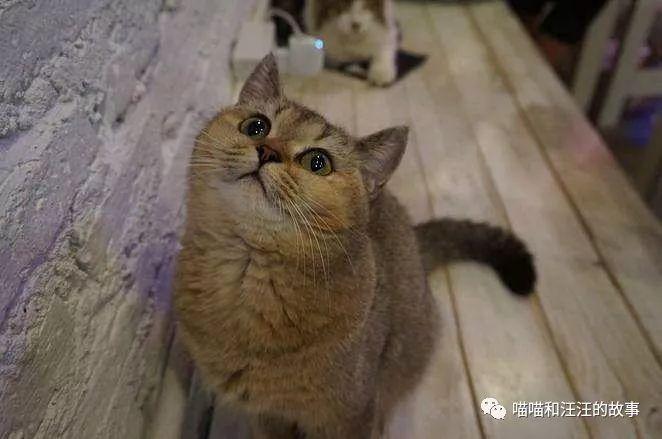 亚洲猫暨在猫的图片图片