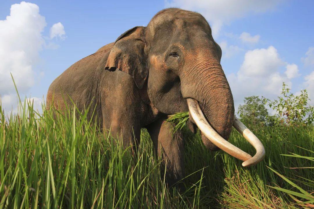 在象群中,三世同堂甚至四世同堂很常见――野生大象虽不像传说中那样