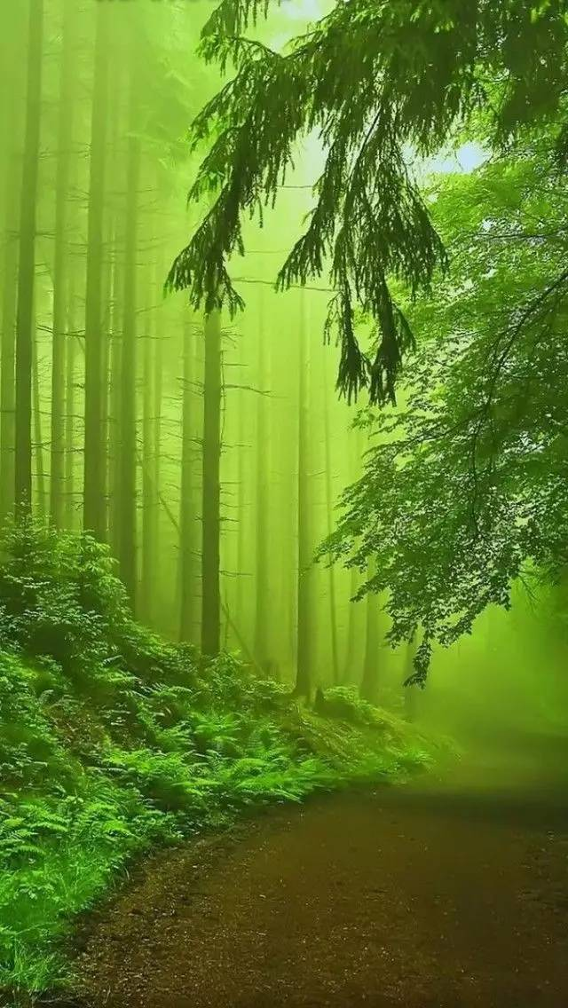 �r,_文化 正文  春的雨淅淅沥沥, 这份美丽, 原本不属于喧嚣的尘世, 而
