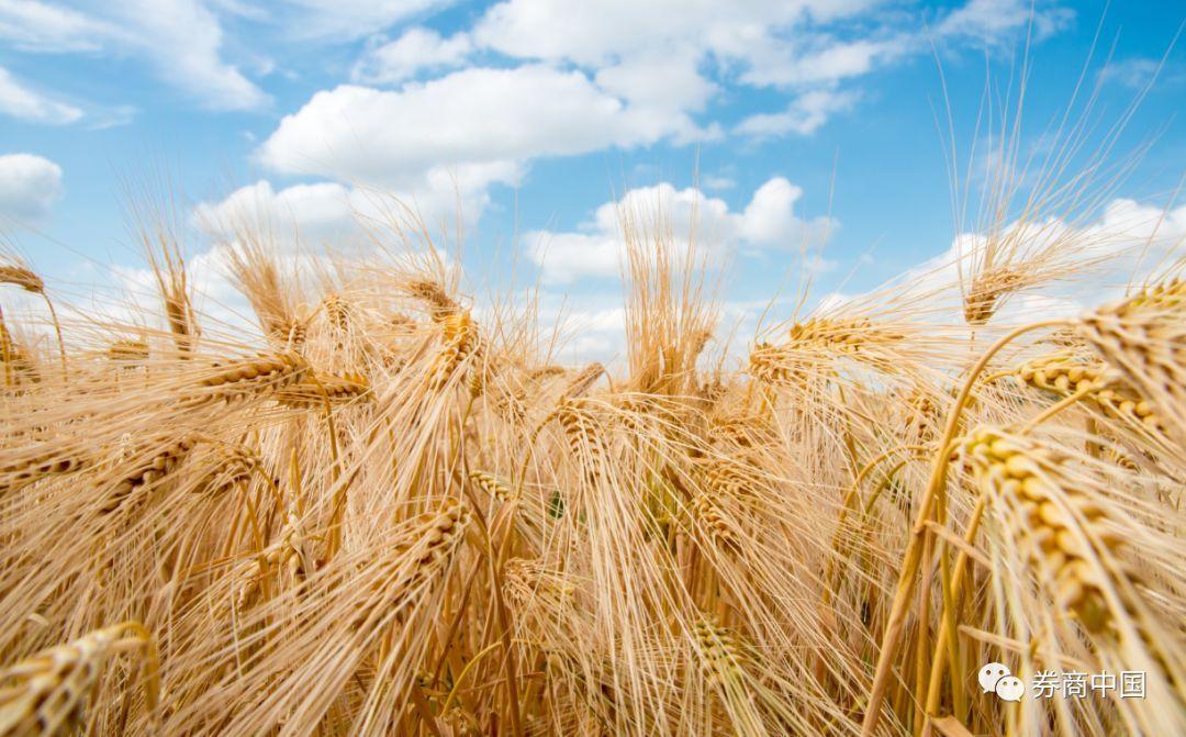 夏粮减产,进口骤降,海外农产品涨价,我国粮食可安好?