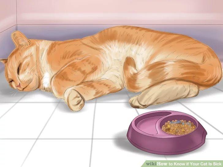 猫咪很热的表现图片
