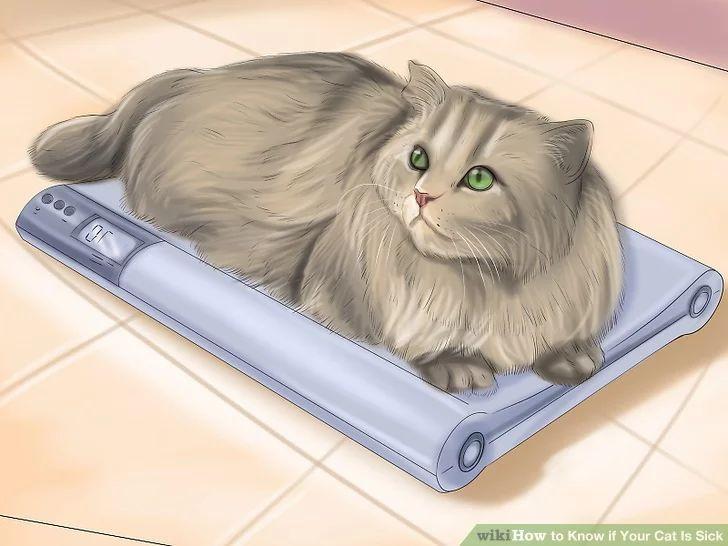 猫咪患热射病有哪些表现_猫咪会热吗_猫咪生病了有哪些症状