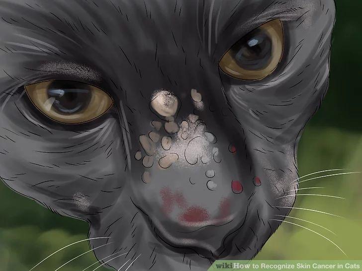 猫咪生病的表现图片