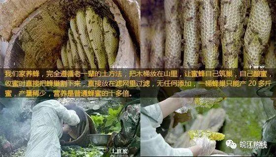 蜂蜜种类这么多,怎样买到纯天然土蜂蜜dxw。@所有人