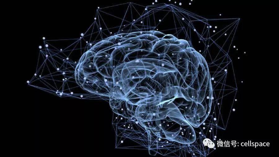 EUR J HUM GENET | 北大饶毅团队揭示:多层次基因组分析揭示参与人类记忆的遗传基因