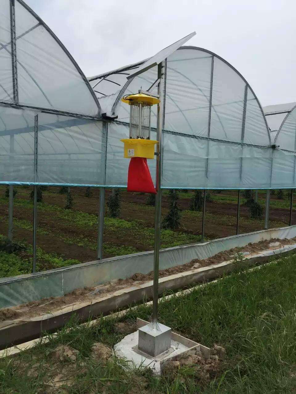 使用太阳能杀虫灯进行无公害蔬菜的生产