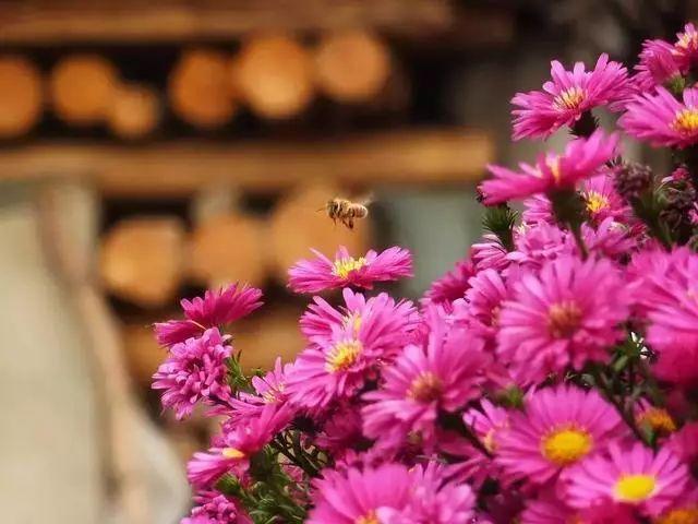 那些适合在八月种植的花,你有种吗图片
