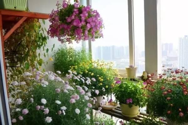 飘窗、封闭阳台、室内窗台也能打造超美花园,终有一款适合你